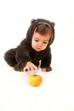 Child dressed as a bear reaches for apple on a white background Stock Photos