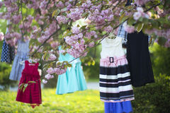 Baby dresses on the tree Stock Photography