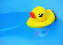 Baby duck. Toy floating on bathtub royalty free stock images