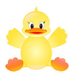 Baby duck. On white background Stock Photography
