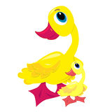 Baby duck with mother illustration Royalty Free Stock Images