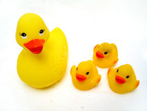 Baby duckies Stock Images