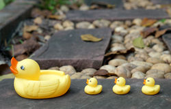 Baby duckling rubber follow the mother duck Stock Photography