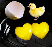 Baby Ducky. Baby ducky and cracked egg with heart shape royalty free stock photography