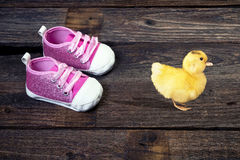 Baby Ducky Walking. Stock Photography