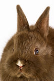 Baby easter bunny rabbit on wh. Ite background. Studio shot royalty free stock images