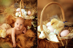 Baby in Easter nest. Child lies in an Easter nest with chicks royalty free stock photo