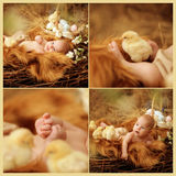 Baby in Easter nest. Child lies in an Easter nest with chicks stock image