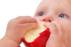 Baby eating apple. Small baby eating apple isolated Stock Photo