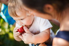 Baby eating an apple Stock Photography