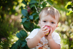 Baby eating an apple Stock Photo