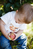 Baby eating an apple Royalty Free Stock Image