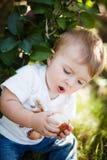 Baby eating an apple Stock Photos