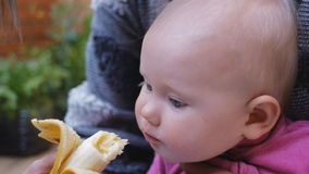Baby eating banana from hands of mother stock video footage