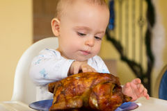 Baby eating a big grilled chicken. One year old baby boy eating a big grilled chicken Stock Photography