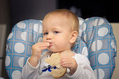 Baby eating bread. Baby in high chair eating bread Royalty Free Stock Photo