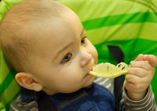 Baby eating lemon on green background Royalty Free Stock Photography