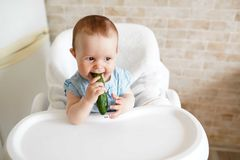 Baby eating vegetables. green cucumber in little girl hand in sunny kitchen. Healthy nutrition for kids. Solid food for infant. royalty free stock image