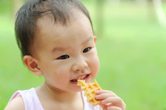 Baby eating  waffle. A chinese baby eating  waffle Stock Photography