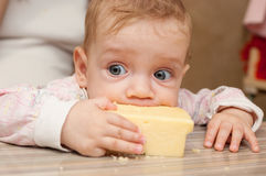 The baby eats big piece of cheese Royalty Free Stock Images