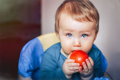 Baby eats read apple. Little baby boy with an apple royalty free stock photography
