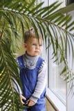 Baby in een blauwe jumpsuit achter een Palm dichtbij het venster stock fotografie