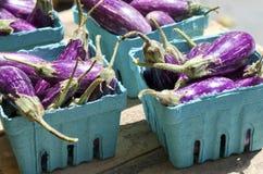 Baby Eggplant Stock Image