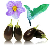 Baby Eggplant fruit, flower and leaf. Group of baby eggplant fruit, flower and leaf isolated on white Stock Image