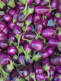 Baby eggplants Stock Photos