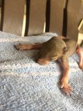 Baby-Eichhörnchen Stockfotos