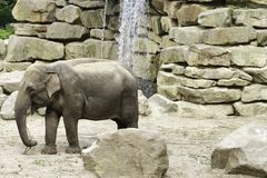 Baby Elefant. Is walking near the rocks royalty free stock photos