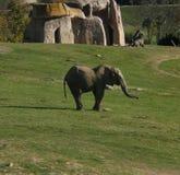 Baby elephant. A baby elephant stock image