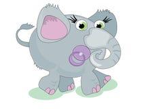 Baby elephant. Grey baby elephant with nipple Stock Photography