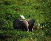 Free Baby Elephant Stock Image - 56580811
