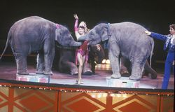Baby Elephant Act, Ringling Brothers & Barnum & Bailey Circus Stock Photo