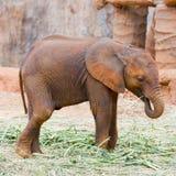 Baby elephant Stock Photos