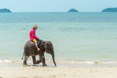 Baby elephant on the beach. Koh Chang, Thailand - March 6, 2016: Domesticated baby elephant on the beach in Koh Chang. Thailands population of domesticated royalty free stock image