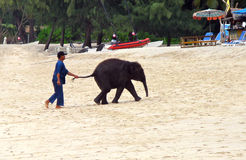 Baby elephant on the beach Royalty Free Stock Images