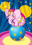 Baby elephant at the circus. Pink baby elephant performance in circus. He is dancing on the big blue ball.Illustration done on separate layers Royalty Free Stock Photos