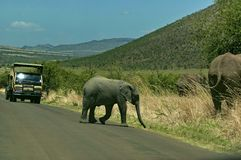 Baby elephant cut off the road Stock Photography