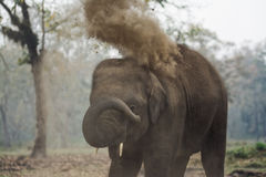 Baby elephant in the Elephant Breeding Centre, Sauraha, Nepal royalty free stock image