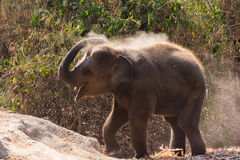 Baby elephant enjoy life. In forest nature park Stock Photo
