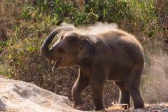 Baby elephant enjoy life Stock Photo