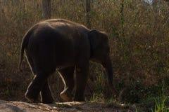 Baby elephant enjoy life Stock Image