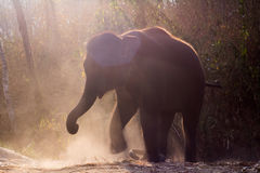 Baby elephant enjoy life. In forest nature park Royalty Free Stock Images