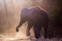 Baby elephant enjoy life Royalty Free Stock Images