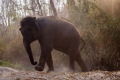 Baby elephant enjoy life. In forest nature park Stock Images