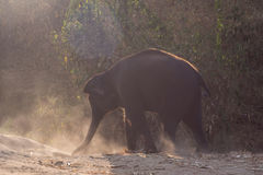 Baby elephant enjoy life. In forest nature park Stock Image