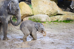 Baby elephant with his mother in mud Royalty Free Stock Photos