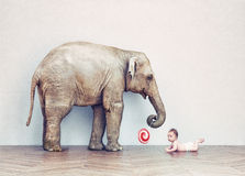 Baby elephant and human baby Royalty Free Stock Photography